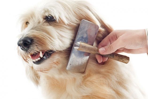 Coloque uma música relaxante e escove seu animal: duas coisas que pode ter certeza, ele vai amar. (Foto: reprodução)
