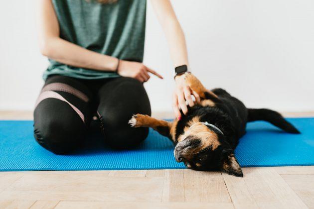 Durante a quarentena, um dos maiores desafios dos tutores é descobrir formas de como acalmar, gastar a energia e entreter o cachorro. Para isso, existe a yoga para cães, dá para acreditar?! (Foto: Pexels)