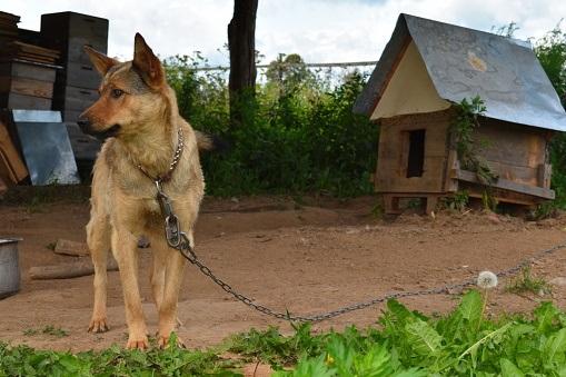 E nada de trancar seu melhor amigo o dia todo, viu? Isso deixa o animal irritado e deprimido. (Foto: Pixabay)