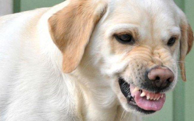 Os cães também são afetados pelos problemas cotidianos e ficam estressados, principalmente se ele sente que seu dono também está. (Foto: Pinterest)
