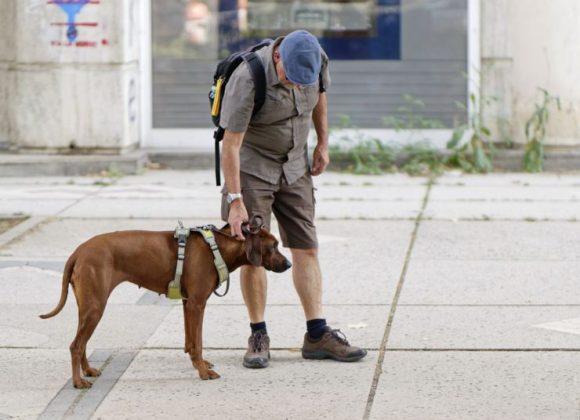 Se para os humanos já é difícil ficar muito tempo trancado em casa, com os cães não é diferente, por isso o passeio é fundamental - para ambos! (Foto: Pixabay)